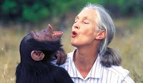 Jane Goodall on Success Made to Last